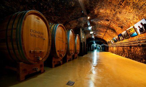 Domäne Wachau - en av verdens 50 beste vinerier!